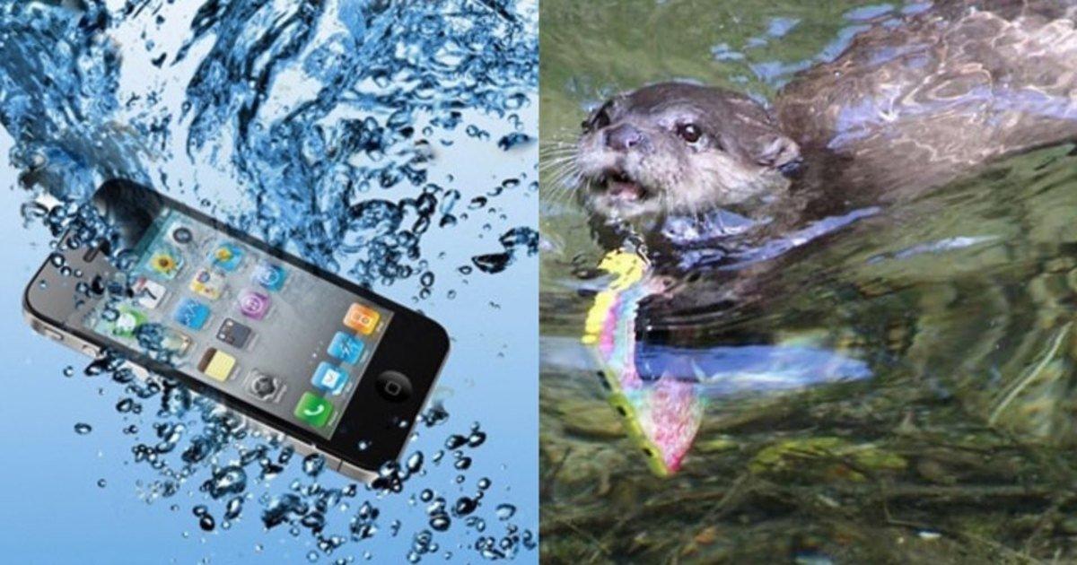 "ec8898eb8bac.jpg?resize=412,232 - ""저.. 제가 이거 주워왔는데요..?""...관광객이 연못에 빠뜨린 아이폰을 찾아 가져다준 수달.JPG"