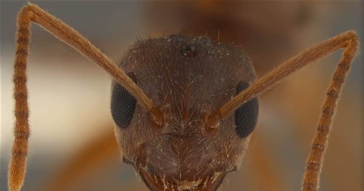 ec8db8eb84ac 2 14.jpg?resize=1200,630 - Cloudy With A Chance Of Swarms Of Ants In Britain Observed Through The Week.