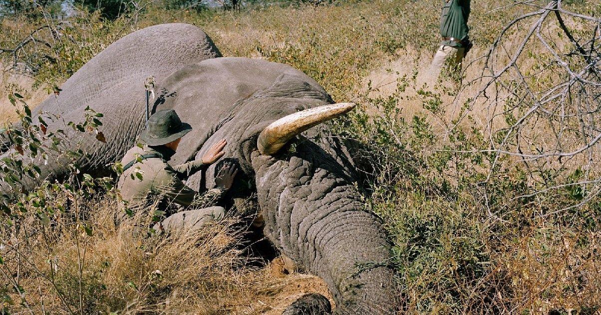 elephant.jpg?resize=412,232 - Botswana: ces dernières semaines, plus de 300 éléphants sont morts mystérieusement