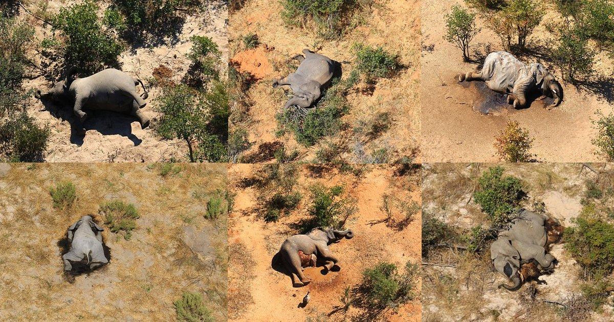 elephants died botswana.jpg?resize=412,232 - More Than 350 Elephants Feared Dead In Botswana's Mysterious 'Die Off'