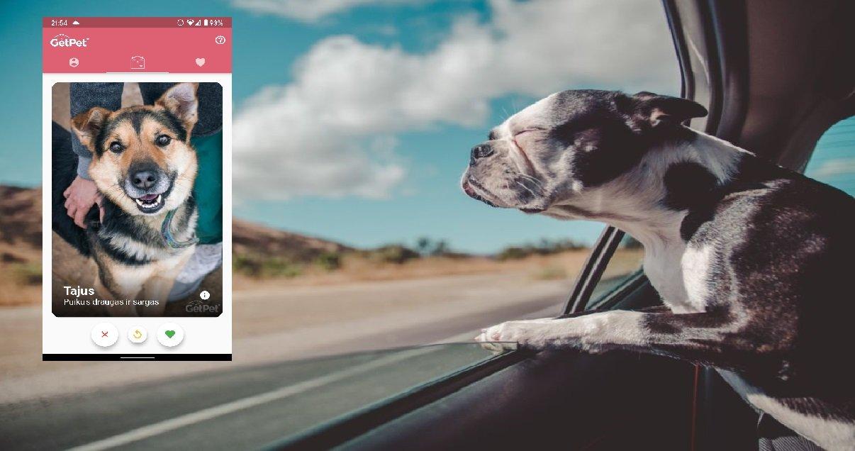 getpet.jpg?resize=1200,630 - Découvrez GetPet, le Tinder pour rencontrer et adopter des chiens