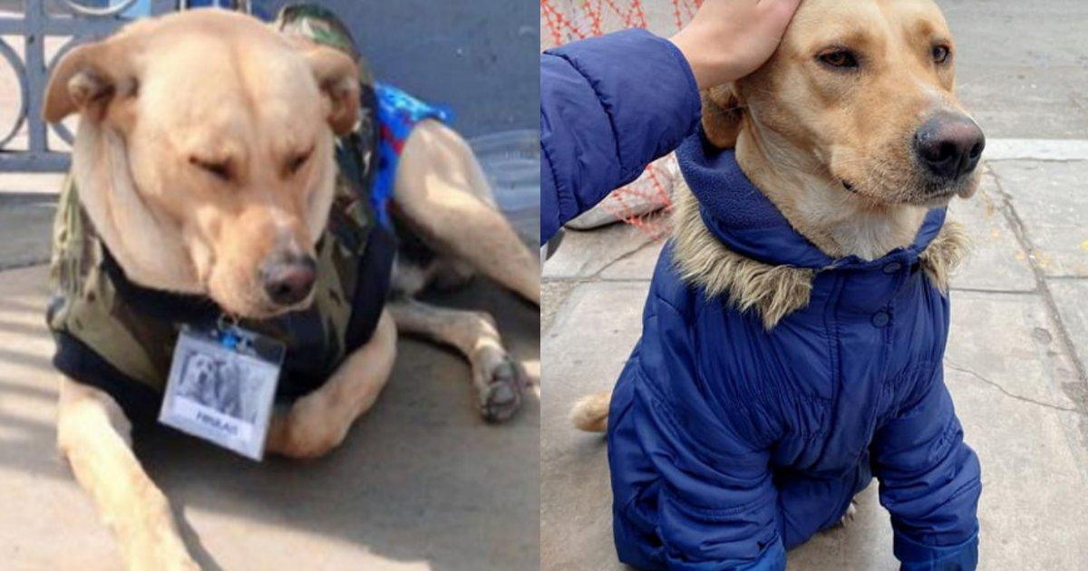 kaiinu 1.png?resize=1200,630 - 新型コロナウイルスに感染した飼い主について行った犬→亡くなったことを知らないままひたすら待ち続ける姿が切ない…