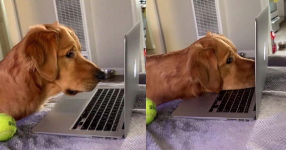 "kakaotalk image 2020 07 05 16 56 01.jpeg?resize=1200,630 - ""보고 싶었어요.. 거기서는 잘 지내죠..?""… 강아지가 노트북을 보자 갑자기 눈물을 보인 슬픈 이유 (+영상)"