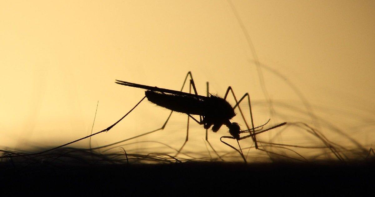 moustique.jpg?resize=1200,630 - Mais au fait, pourquoi les moustiques piquent-ils plus le soir ?