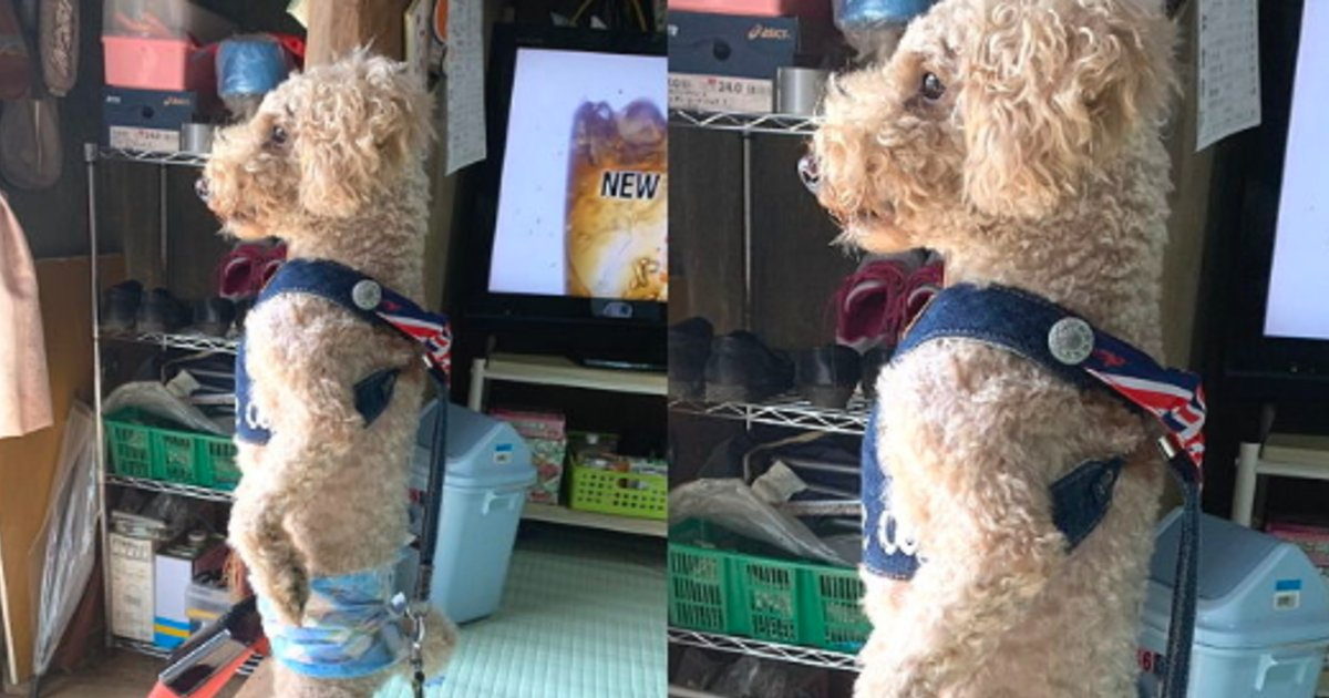 nihonashi.png?resize=1200,630 - 飼い主がいつ帰ってくるかひたすら待ち続ける飼い犬→二本足で立ったまま動かないその姿がシュールすぎる件
