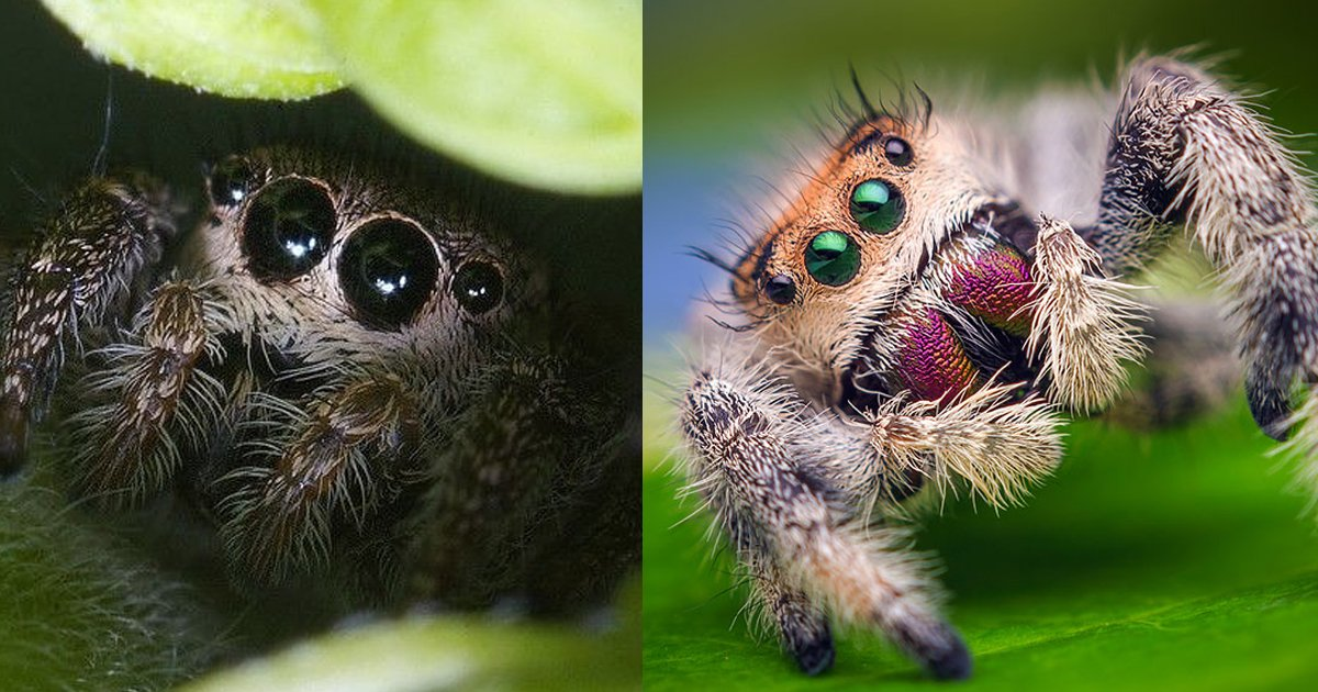 spiders are cute.jpg?resize=1200,630 - Spiders Are Cute And Here Are 8 Fabulous Reasons Why