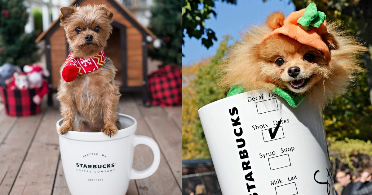 starbucks pups.jpg?resize=1200,630 - 10 Flattering Starbucks Pup Cup Images Sure To Melt Your Heart