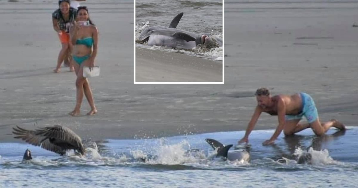 untitled design 5 4.jpg?resize=412,232 - Beachgoers Warned To Stop Harassing Resident Dolphins For Photos