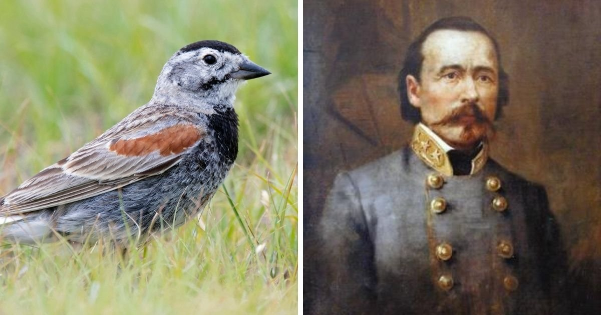1 117.jpg?resize=1200,630 - A Bird Named After a Confederate General Has a New Identity