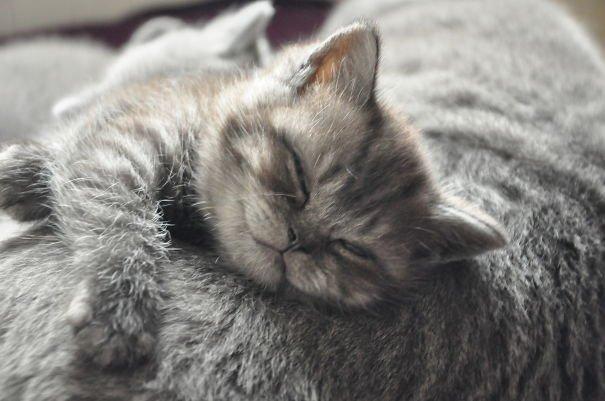 Cuddling His Mum