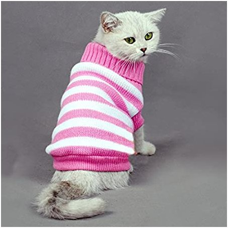 cats with sweaters