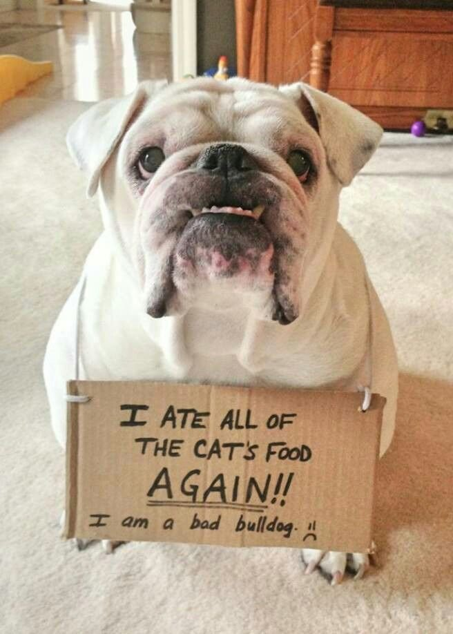 Bulldog Hall of Shame | Funny dog signs, Animal shaming, Bulldog