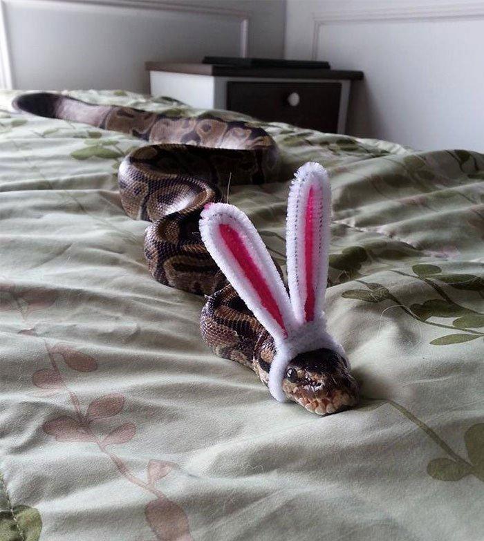 snakes wearing tiny hats