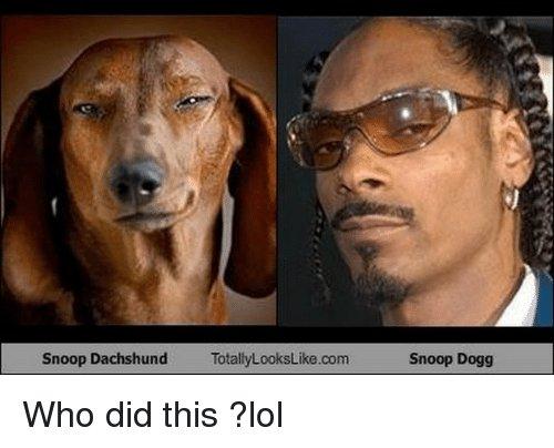snoop dogg meme