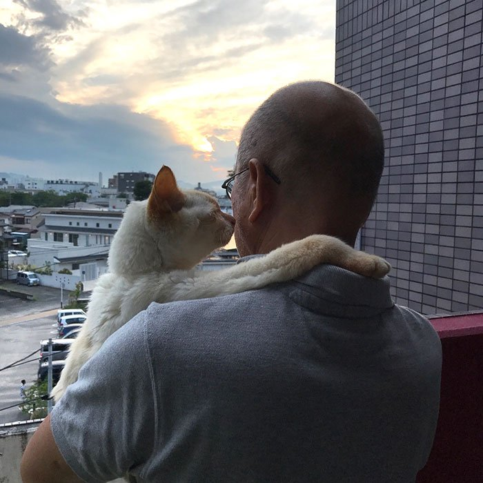 cat dads