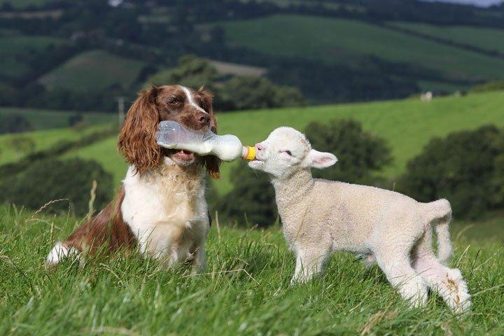 friendship with animals