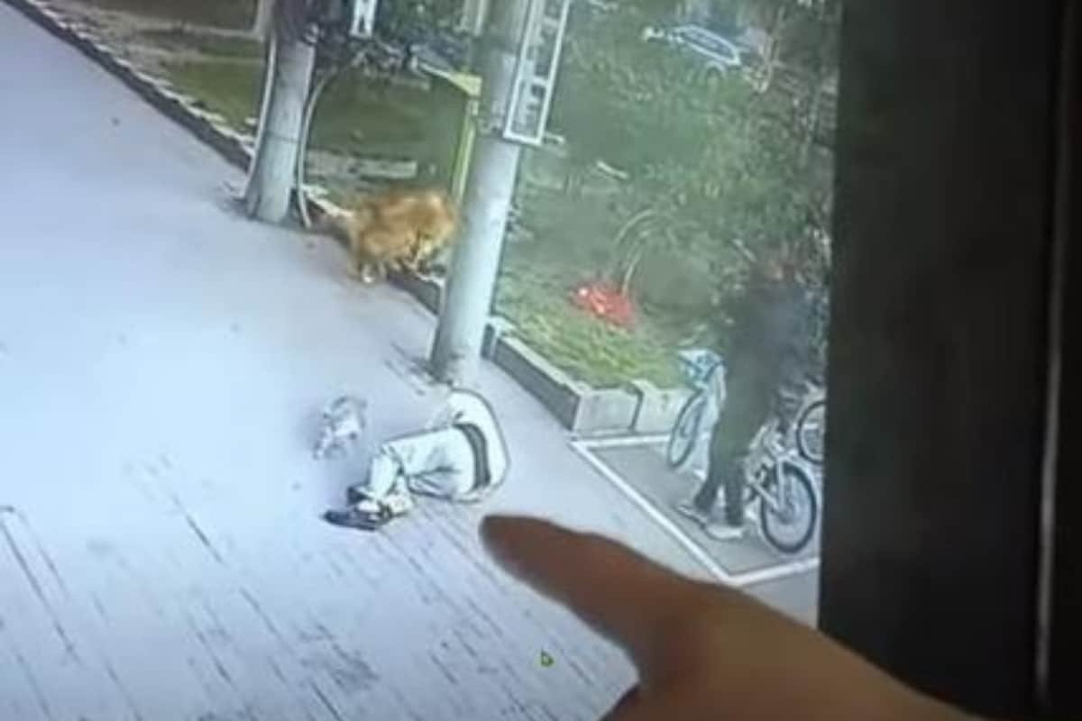 Cat Comes Crashing Down on Chinese Man