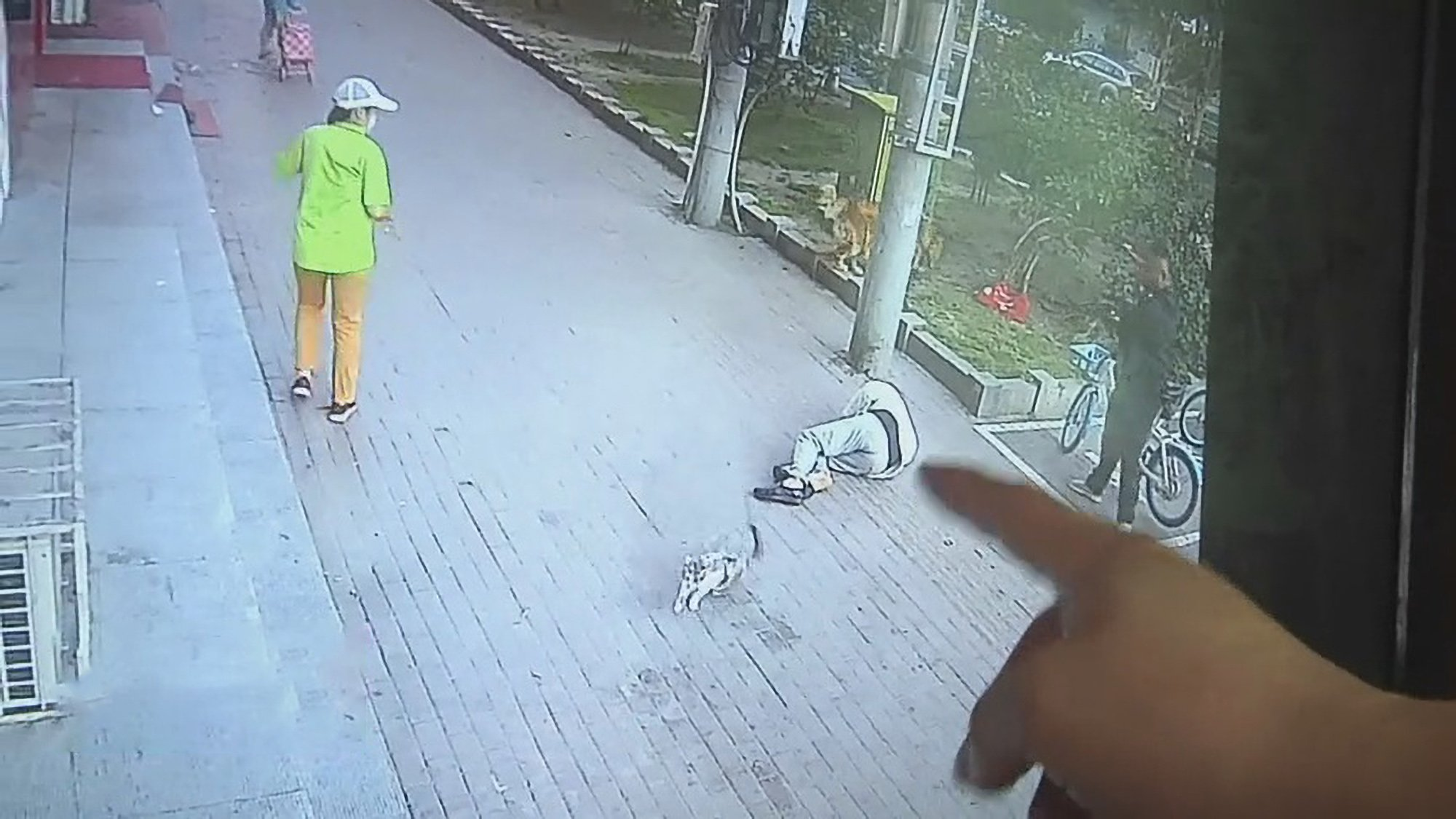 Cat Falls Out Of Sky And Onto Pensioner