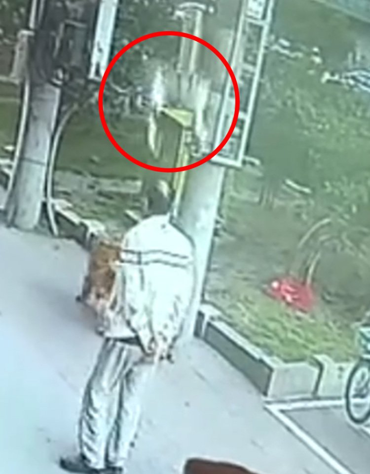 Bizarre moment cat falls from sky and knocks out pensioner before ...