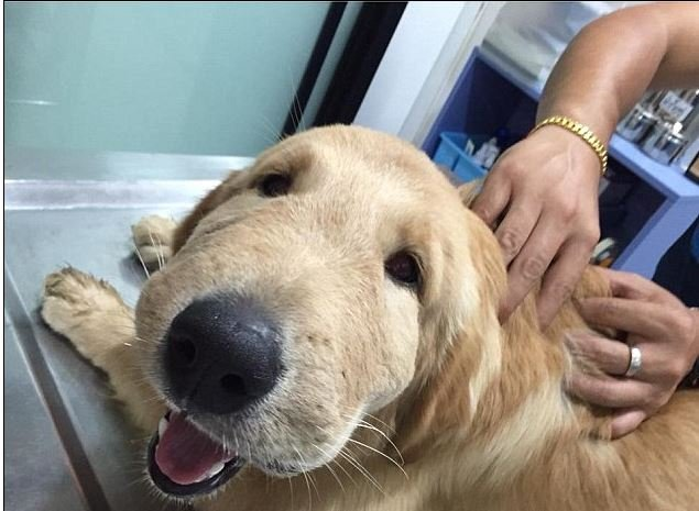 bee stings on dogs