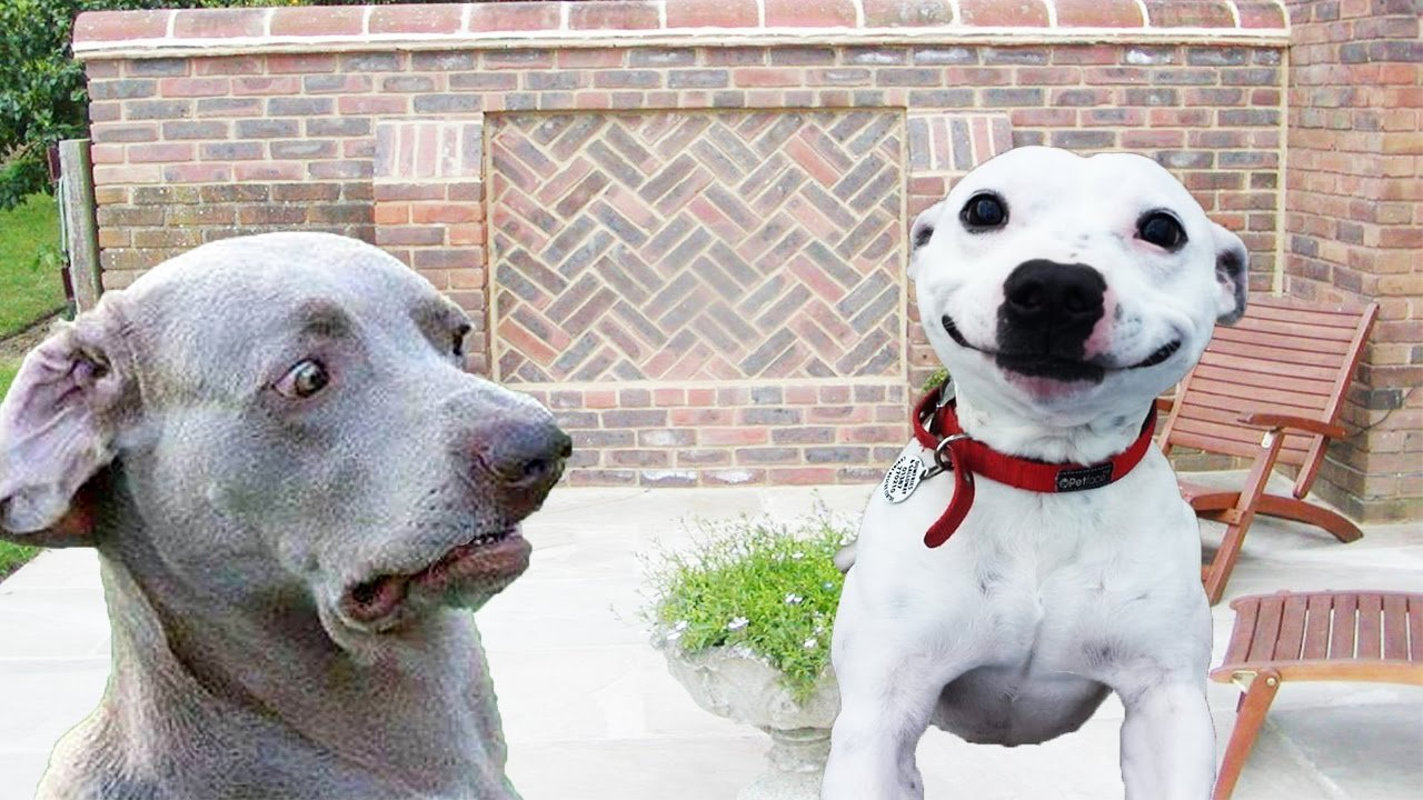 dogs with funny faces
