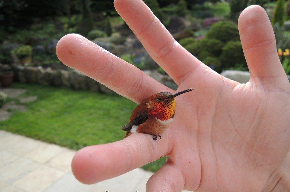 this is worlds smallest bird