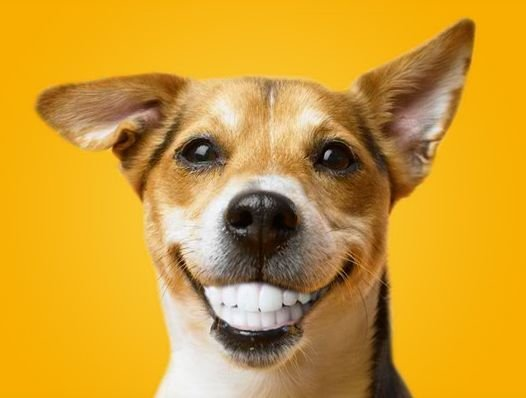 do dogs laugh