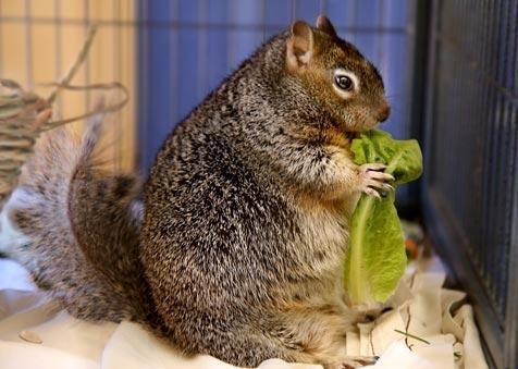 Fat Squirrel | Best Friends Animal Society