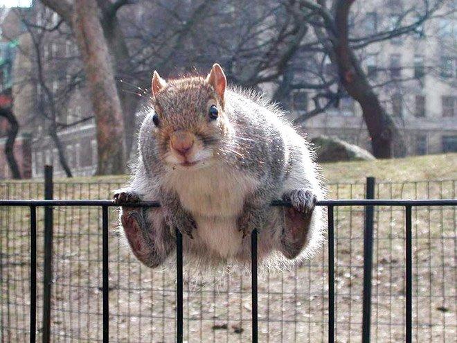 Fat squirrels 2019