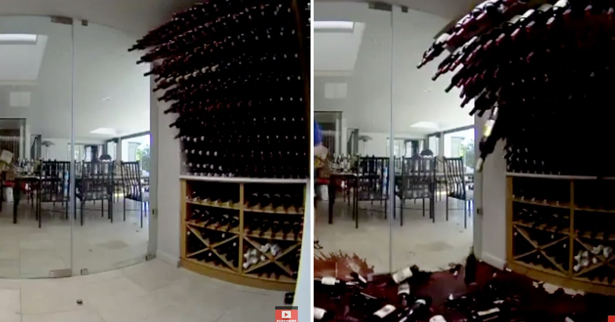 "4 60.jpg?resize=412,232 - ""값비싼 와인 와장창""... 전부 떨어지는 걸 발견한 집주인 반응 (영상)"