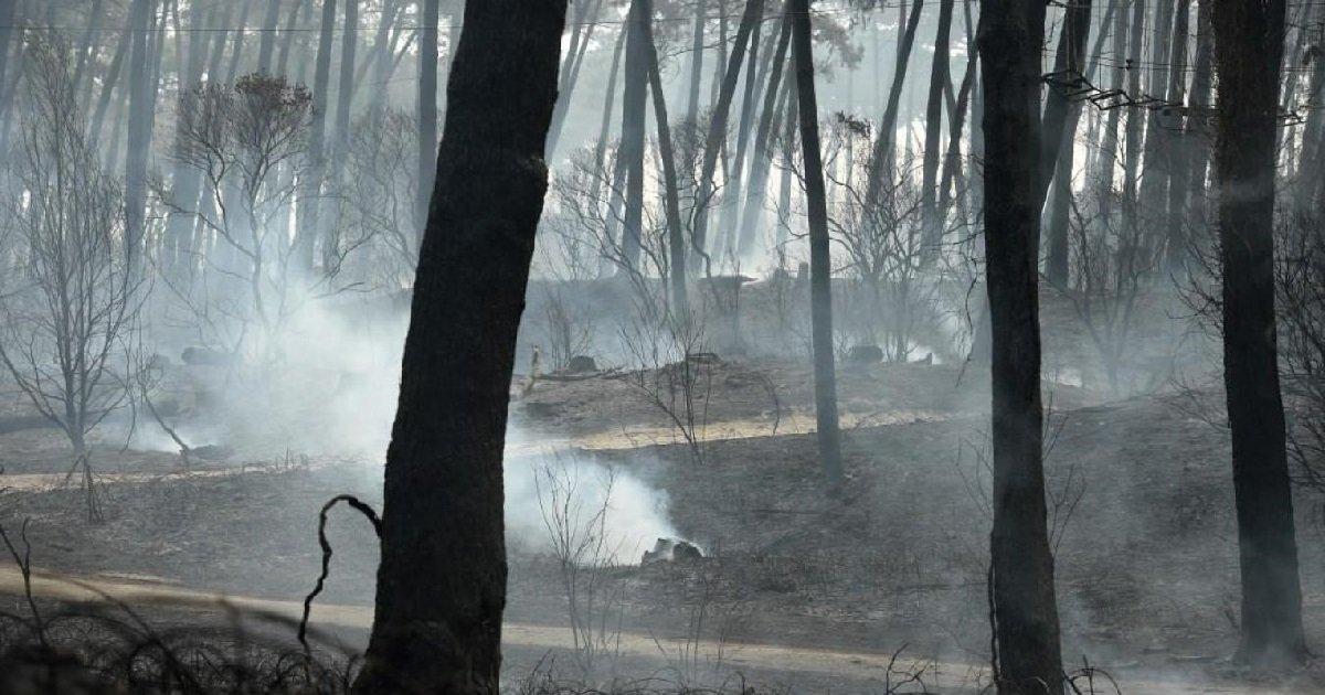 """anglet.jpg?resize=412,232 - Incendie d'Anglet: un jeune homme de 16 ans mis en examen pour """"destruction volontaire de forêt"""""""