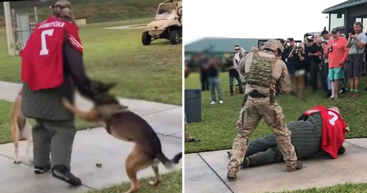 attack.jpg?resize=1200,630 - Navy SEALs Probe Video Of Military Dogs Attacking 'Target' Clad In Kaepernick Jersey
