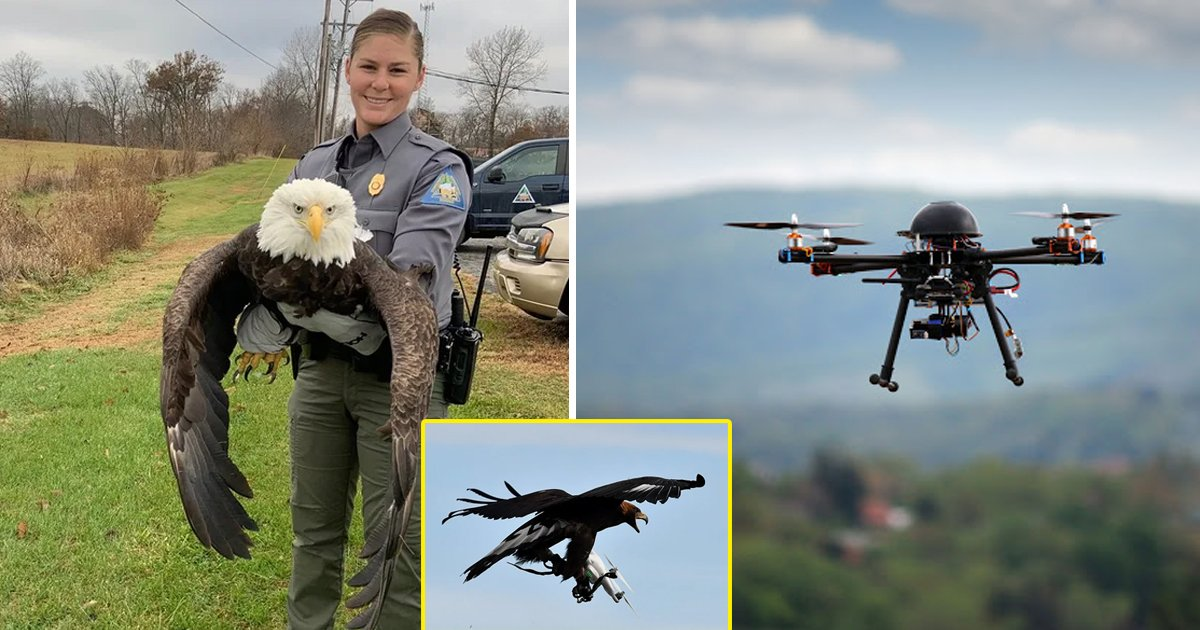 bald eagle.jpg?resize=1200,630 - Bald Eagle Destroys $995 Government Drone, Rips Off Propeller At 162Ft In Michigan
