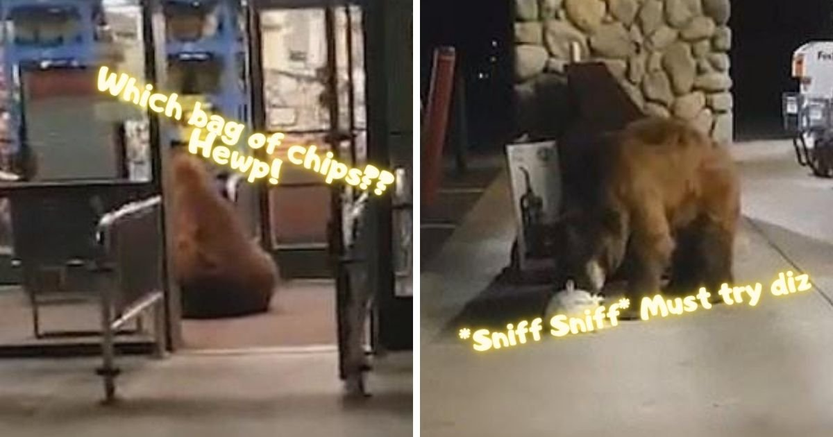 bear5.jpg?resize=1200,630 - Large Bear Goes To Grocery Store, Grabs A Bag Of Chips, Then Sits Outside To Eat