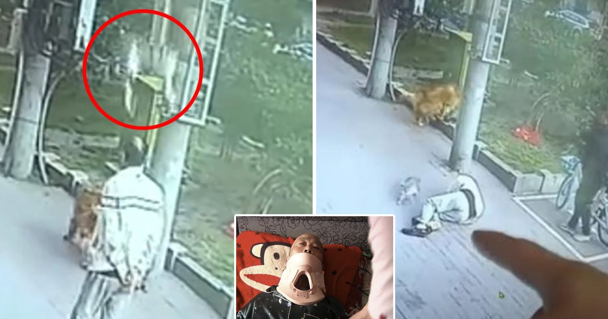 cat falls.jpg?resize=1200,630 - Cat Fell Out Of Sky And Crashed Into Elderly Man's Head, Knocking Him Unconscious