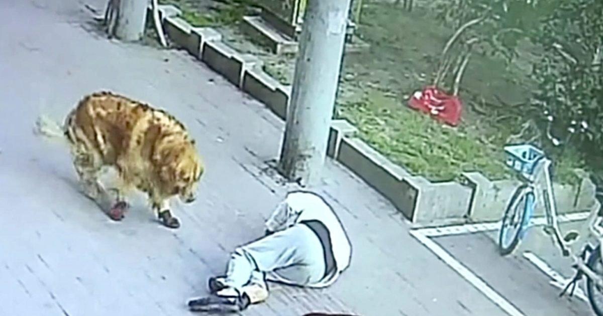 catfallman e1597763586744.jpg?resize=1200,630 - KO : Un homme promenant son chien a été assommé par un chat tombant d'un balcon
