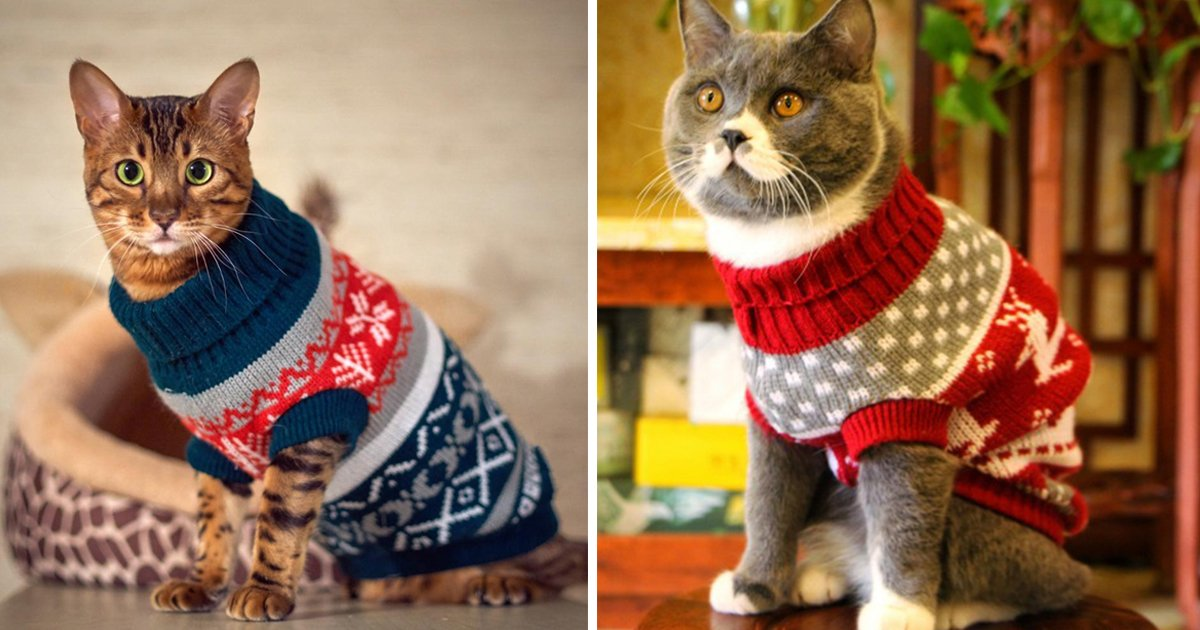 cats sweater.jpg?resize=1200,630 - Gear Up In Feline Style With These Adorable Cats With Sweaters Images