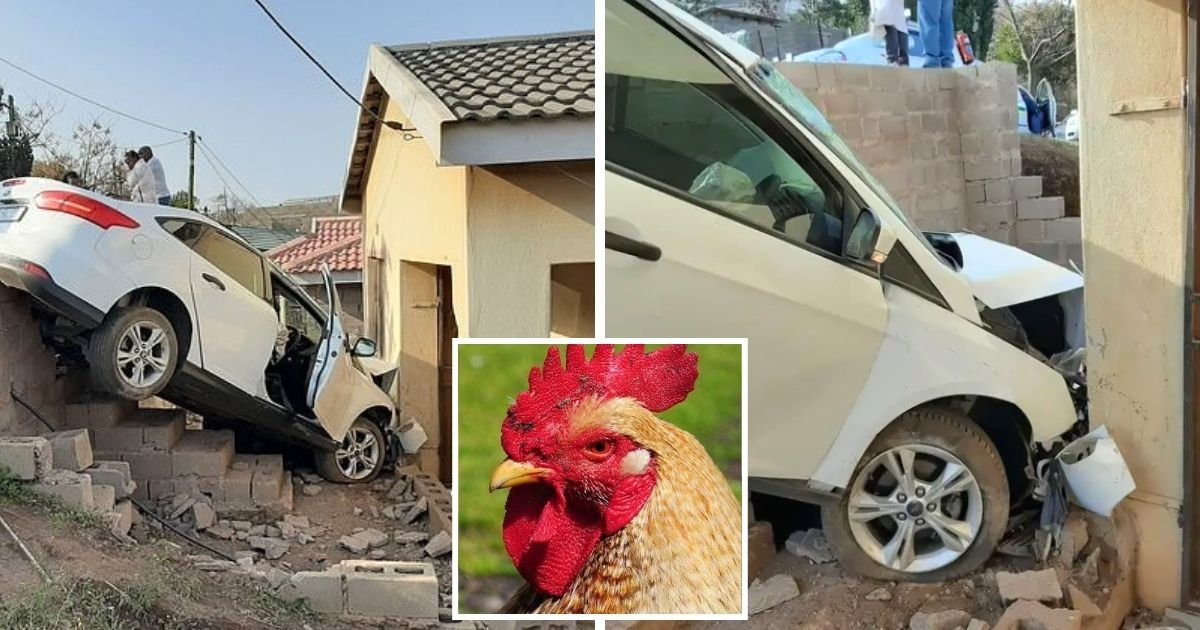 chicken4.jpg?resize=1200,630 - Driver Lost Control Of His Car And Crashed Into A House Because Of A Chicken