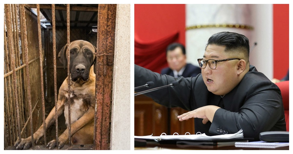 collage 42.jpg?resize=412,275 - North Koreans Forced to Forfeit Their Pet Dogs That Will Likely Be Butchered For Their Meat