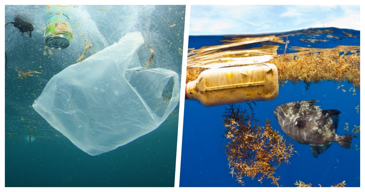 collage 56.jpg?resize=1200,630 - Study Suggests There Is Much More Plastic In The Atlantic Ocean Than Previously Suggested