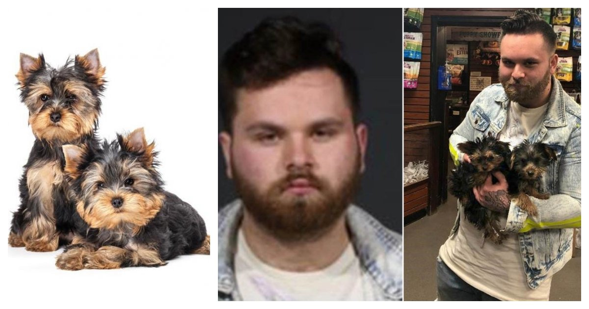 collage 64.jpg?resize=1200,630 - Man Who Used Fake ID To Steal 2 Yorkshire Terrier Puppies Makes Most Wanted List