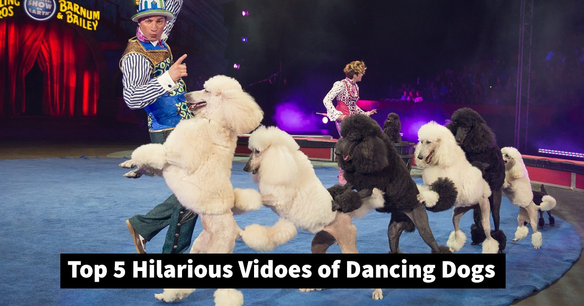 dancing dogs.jpg?resize=1200,630 - These 5 Videos With Dancing Dogs Are Giving Canine Talent A New Name