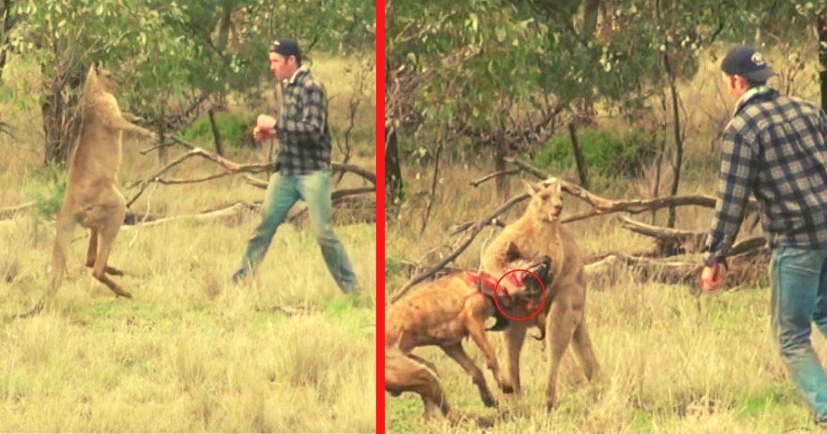 diseno sin titulo 54.png?resize=412,232 - VIDEO: Hombre Enfrenta A Un Canguro, Porque Estaba Ahorcando A Su Perro
