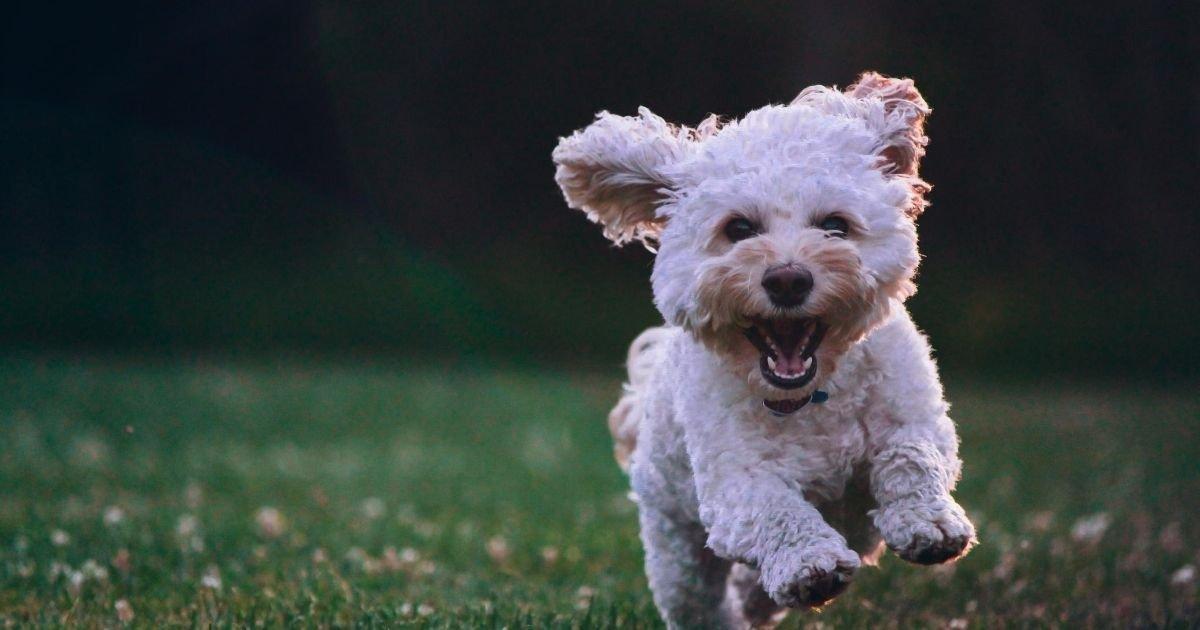 diseno sin titulo 82.jpg?resize=1200,630 - Perros Pueden Detectar El Coronavirus Oliendo La Saliva De Un Infectado