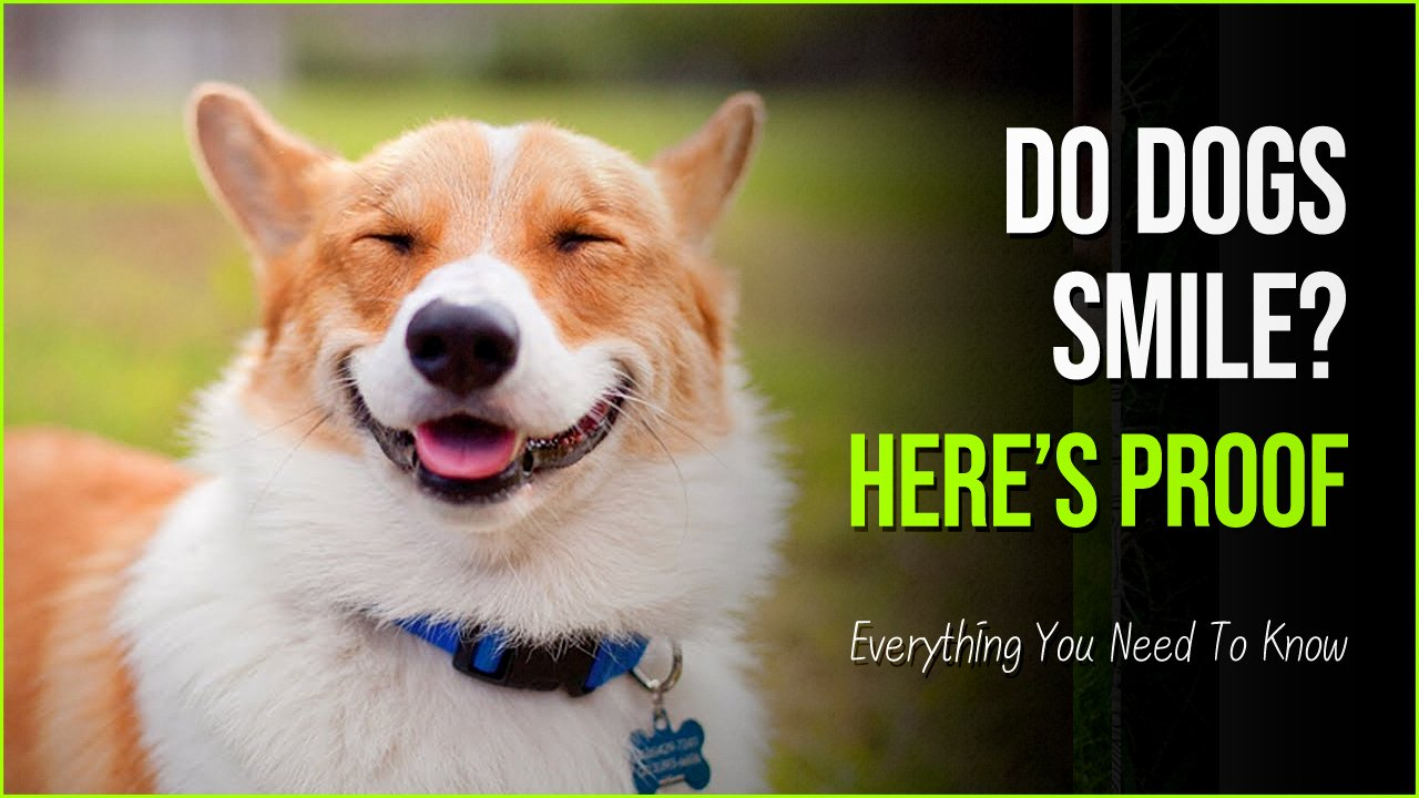 do dogs smile.jpg?resize=1200,630 - These Pictures Answer Do Dogs Smile Or Is It Just A Misconception?