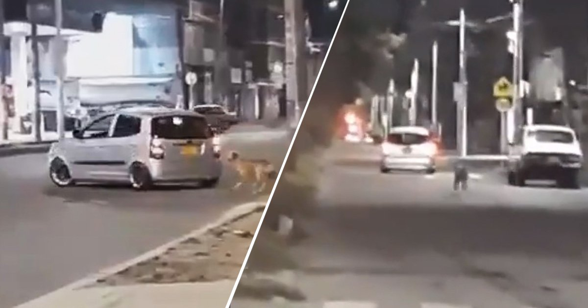 dog 2.jpg?resize=1200,630 - Video Shows A Poor Dog Desperately Running After The Owner Who Just Dumped Him
