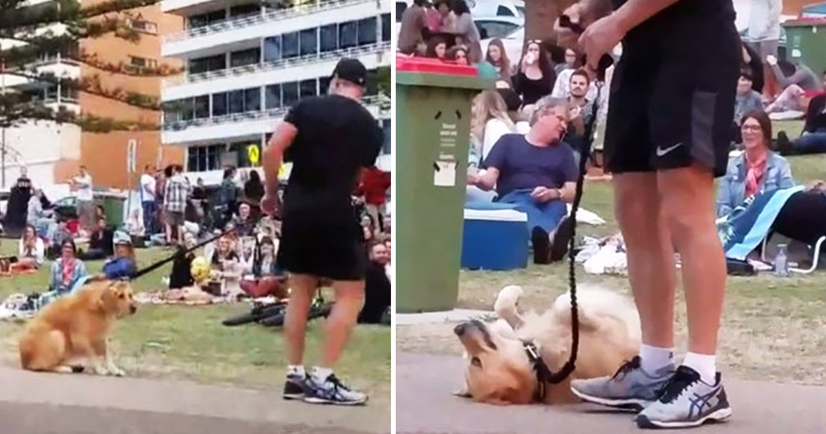 dog dead.jpg?resize=412,232 - Hilarious Dog Plays Dead, Tricks Owner So She Doesn't Have To Leave Park