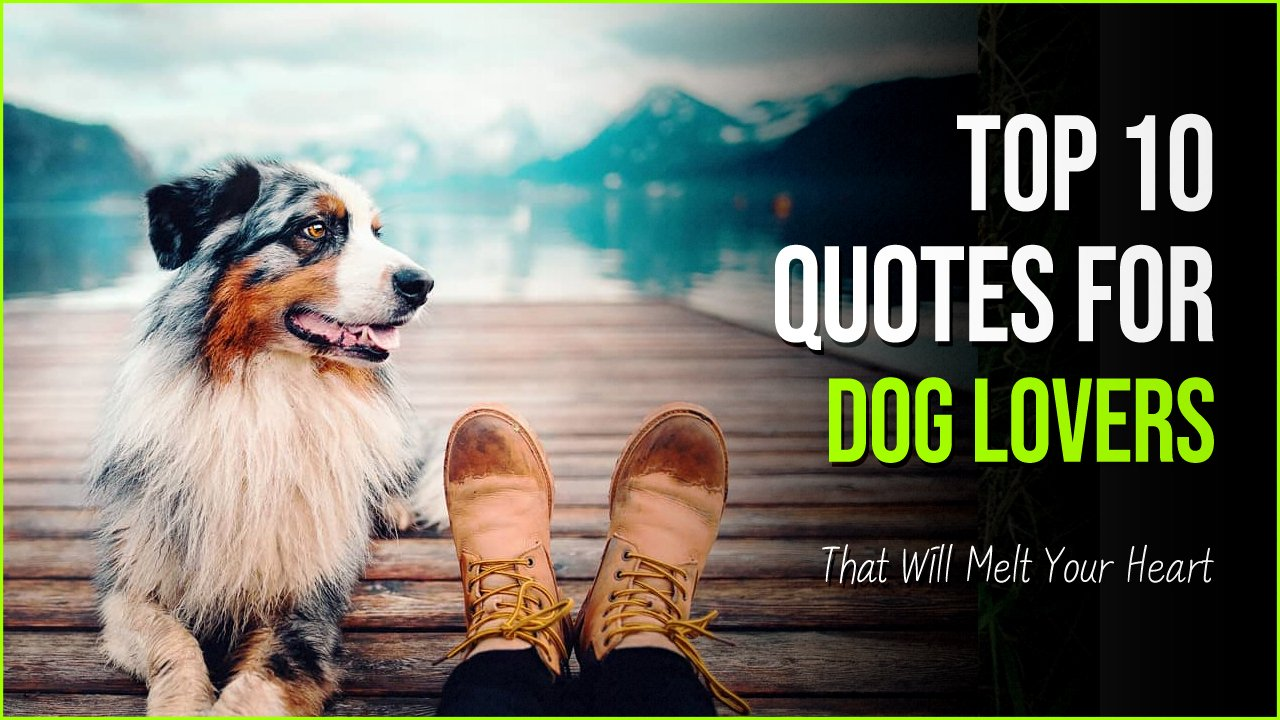 dog quotes.jpg?resize=1200,630 - 10 Quotes for Dog Lovers With Pictures That Will Melt Your Heart
