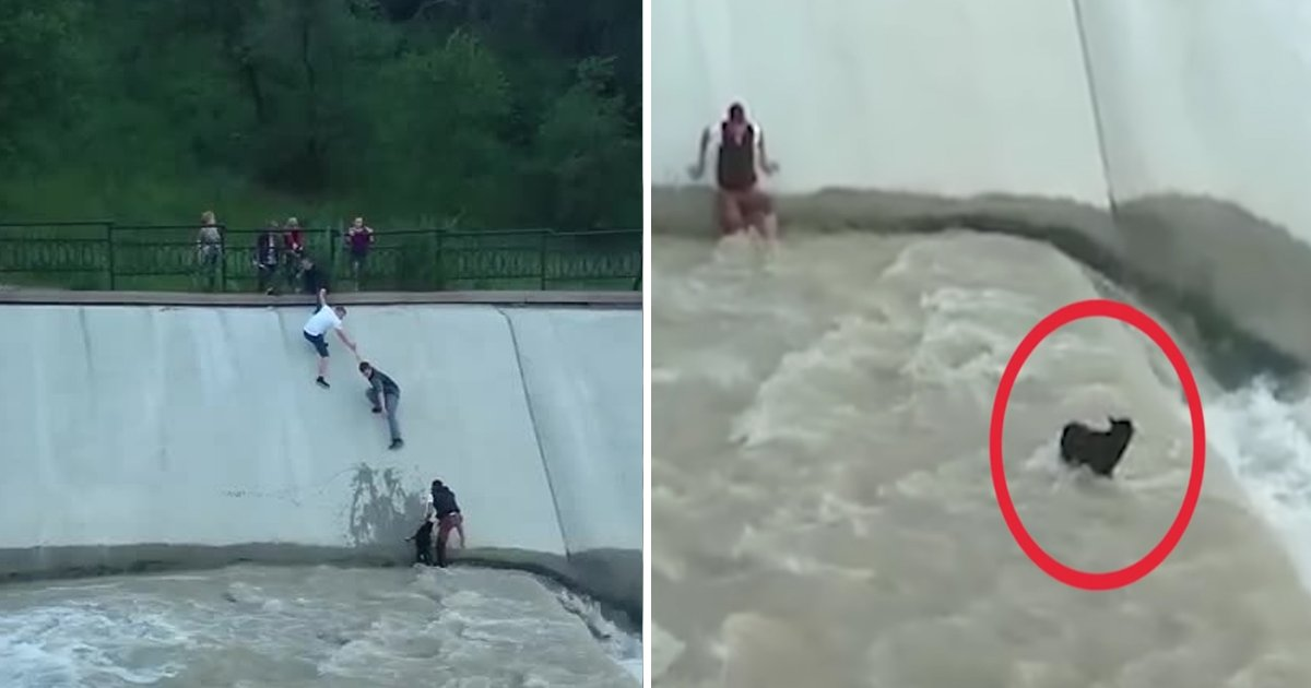 dog saved.jpg?resize=412,232 - Strangers Form Human Chain In Water To Make Stranded Dog Rescue Operation Successful
