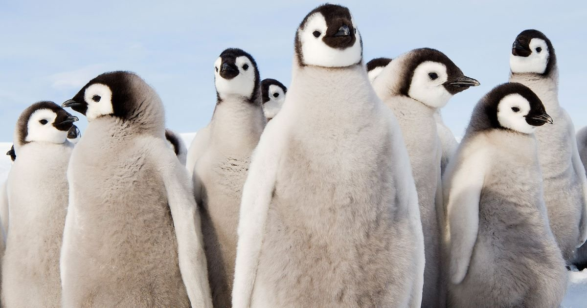 ec8db8eb84ac 3 23.jpg?resize=412,275 - Penguins Are Not From Antarctica, But From Down Yonder, According To Recent Study